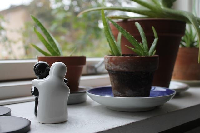 vse o sobnih rastlinah